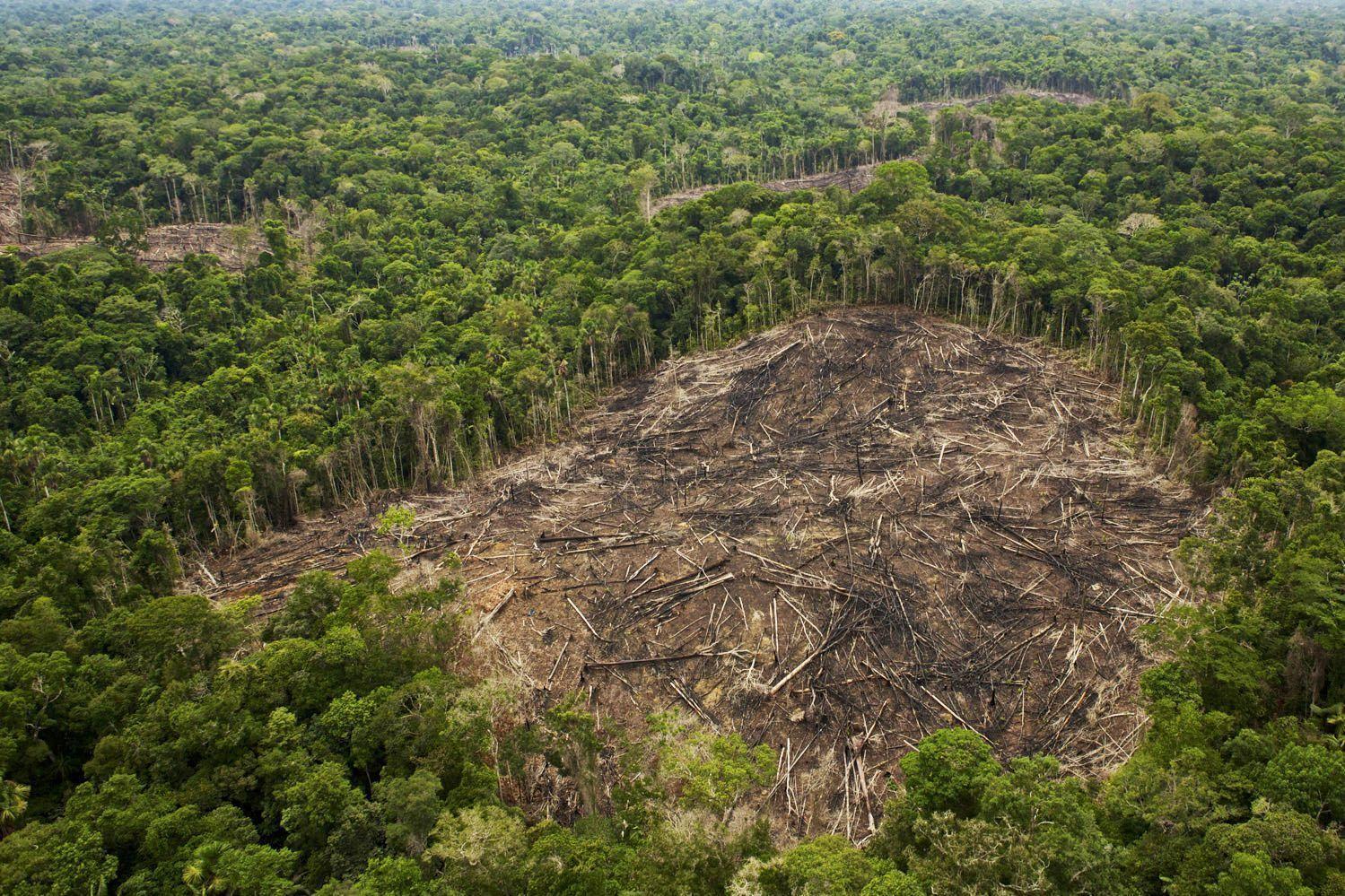 amazonia tala Perú