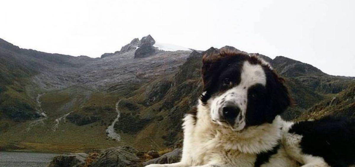 Mucuchíes, el perro del Libertador