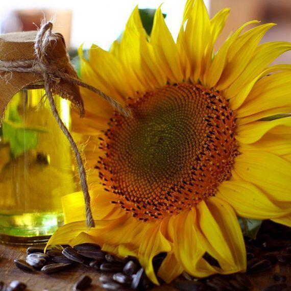 Diseñan planta para producir aceite vegetal ozonizado
