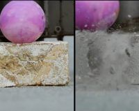 El micelio de hongos revoluciona la construcción