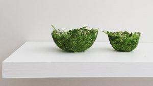Envases biodegradables a partir de algas son una realidad