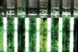 Biológo mexicano creó dispositivo con forma de árbol que transforma el CO2 en oxígeno y biomasa