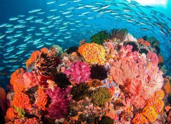 La vida marina es vital para la regulación del clima en la Tierra