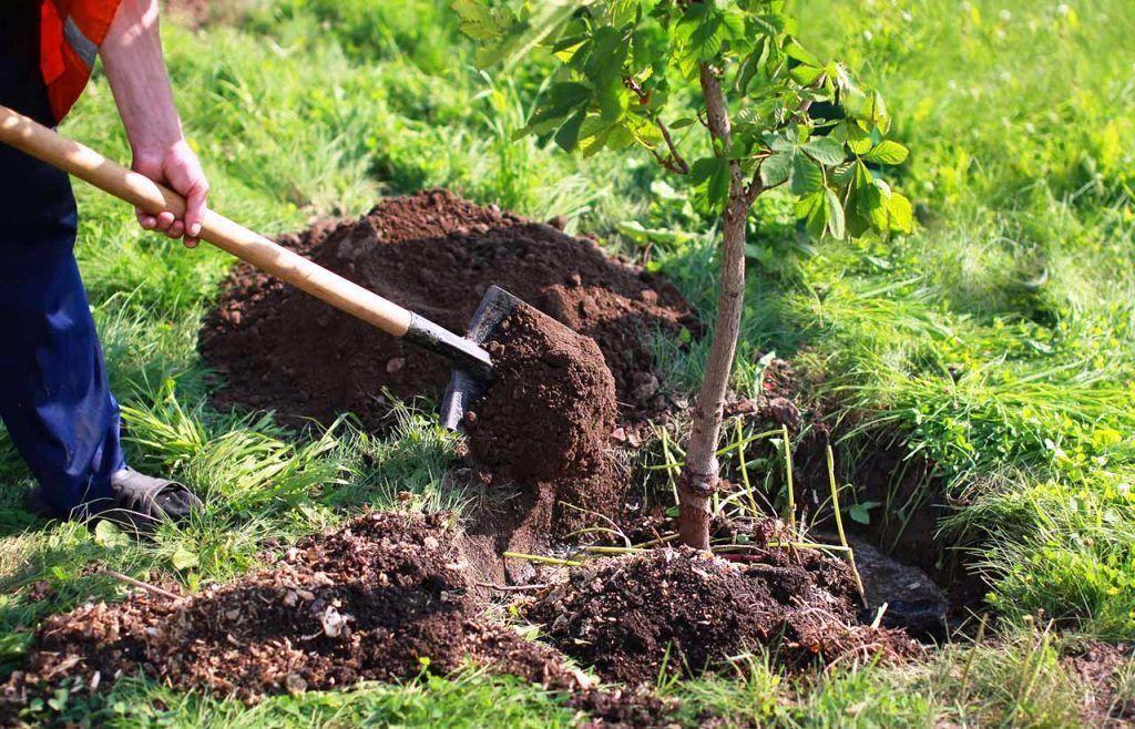 Cómo sumarnos a la lucha contra la deforestación
