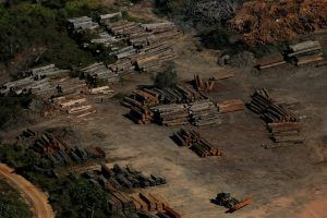 La devastación de la Amazonía brasileña crece vertiginosamente