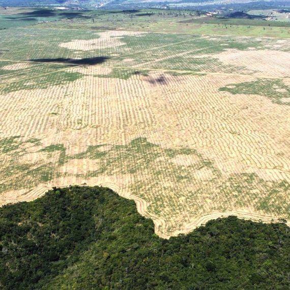 La Amazonía nos reclama - Haiman El Troudi