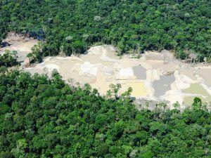 ¿Quiénes están detrás de la explotación de la Amazonía?