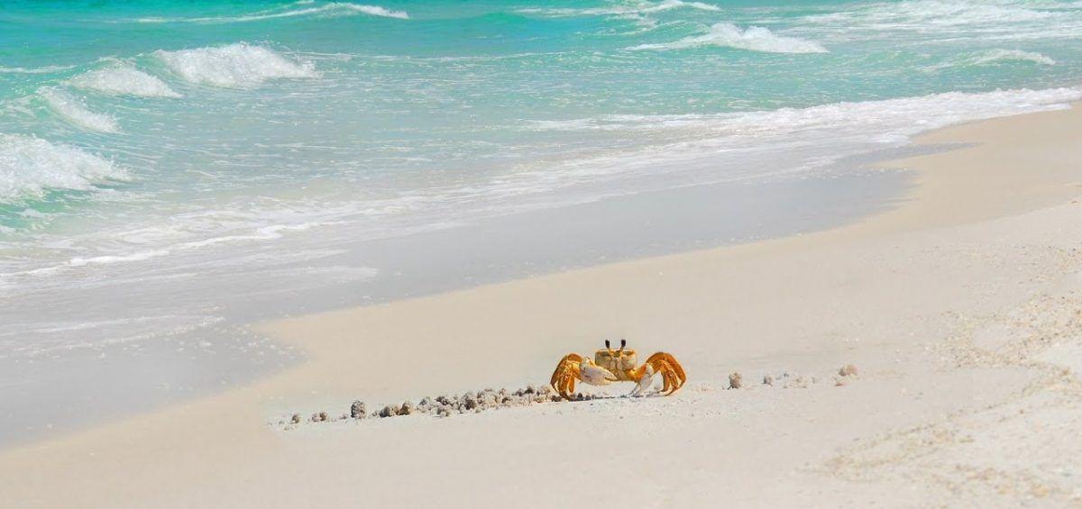 Cuidemos nuestras playas todos los días