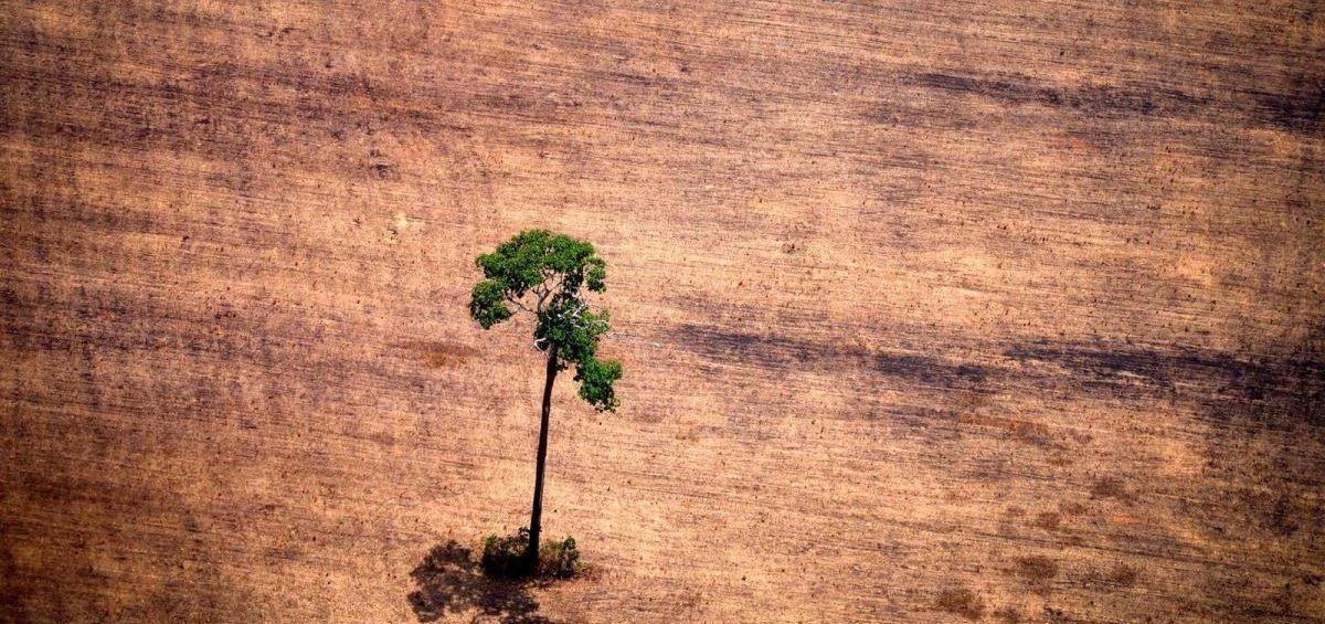 Más del 50% de la Amazonía podría transformarse en sabana