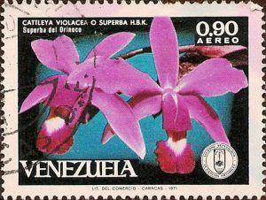 Superba del Orinoco, estrellas púrpuras que habitan la Amazonía