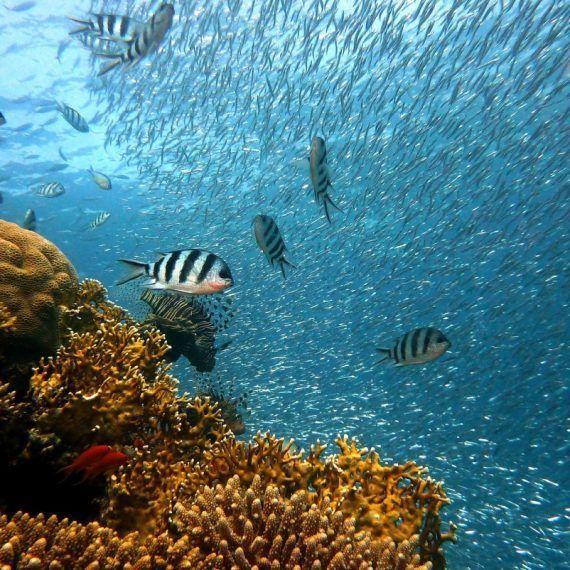 Salvar los océanos para salvar nuestras vidas