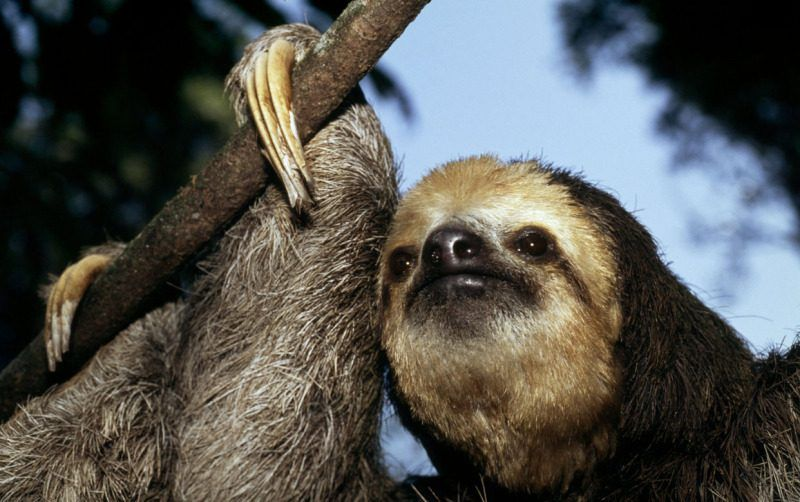 Una de cada tres especies del planeta podrían extinguirse en 50 años