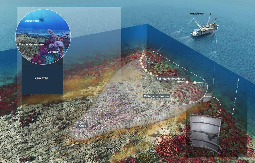 Fondo marino del Agujero azul el área más dañada del mundo