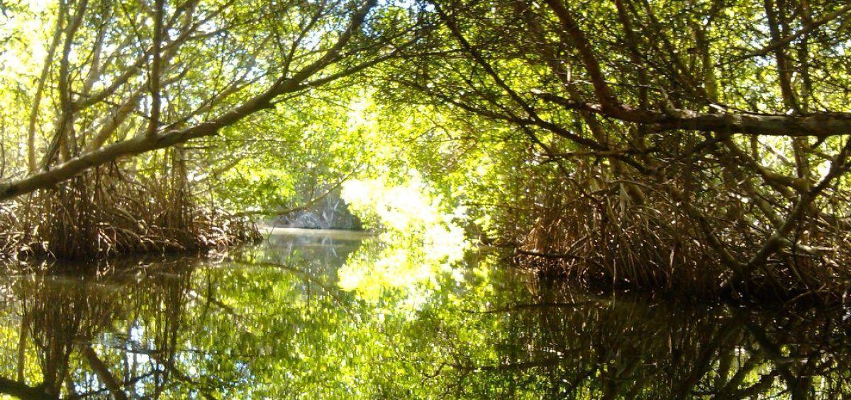 En La Restinga el amor se pasea por canales naturales