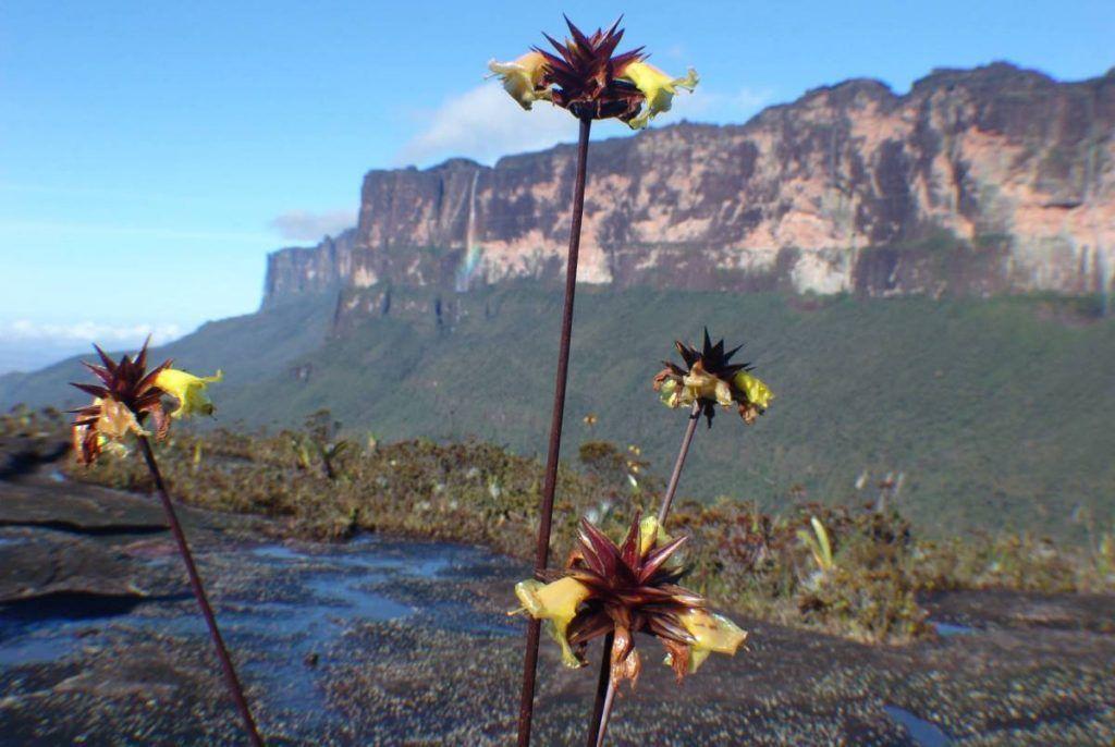¿Cómo ayudamos a conservar la biodiversidad?