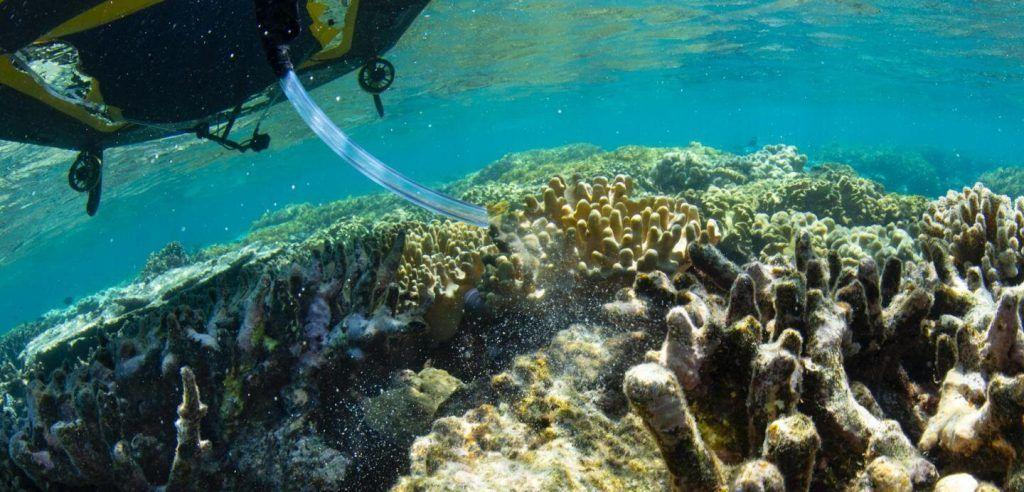 Científicos emplean robots para repoblar la Gran Barrera de Coral