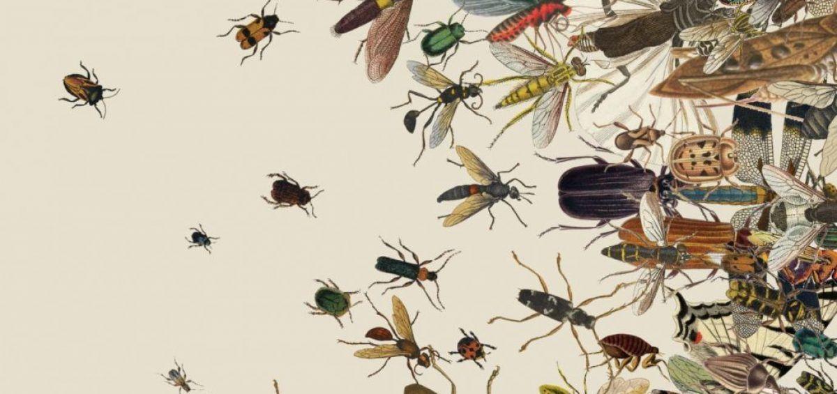 Nacen esperanzas de revertir extinción de insectos en el planeta
