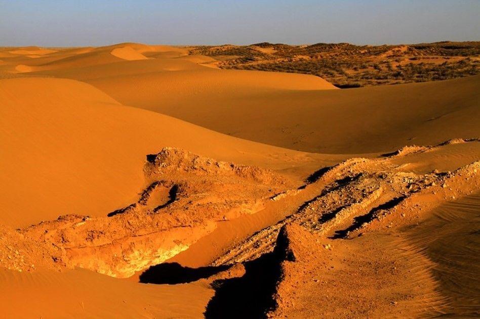 El desierto Mu Us se ha transformado en un hermoso bosque