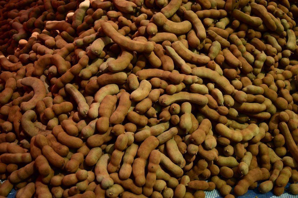Quien planta tamarindos cosecha salud y bienestar