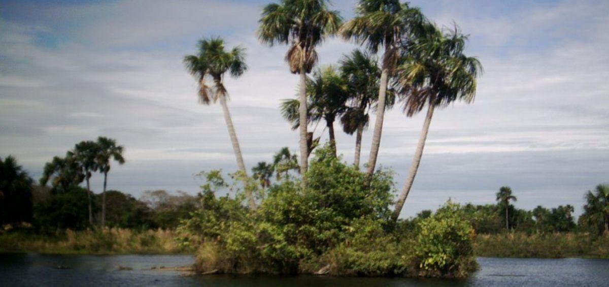 El Moriche, árbol de la vida