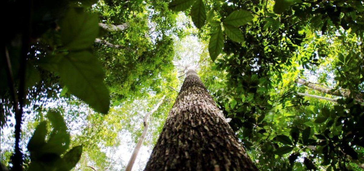 Proteger la biodiversidad, la mejor vacuna ante futuras pandemias