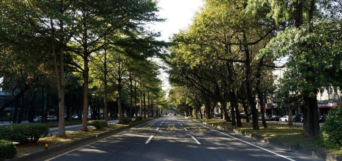 Los árboles urbanos ayudan a mitigar efectos del cambio climático