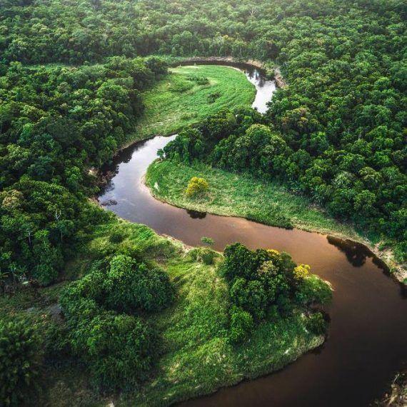 Bosques de Brasil dejan de absorber CO2 y ahora lo emiten