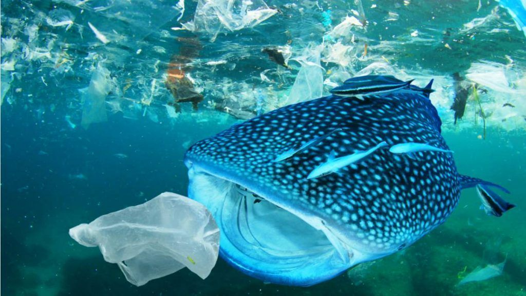 Una alternativa al plástico que combina polímeros naturales y grafeno