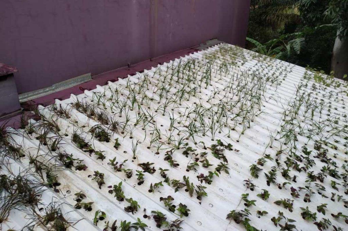 Cultivar en los techos con la primera teja hidropónica del mundo