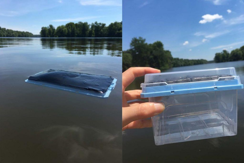 El pez globo inspira un gel para purificar el agua