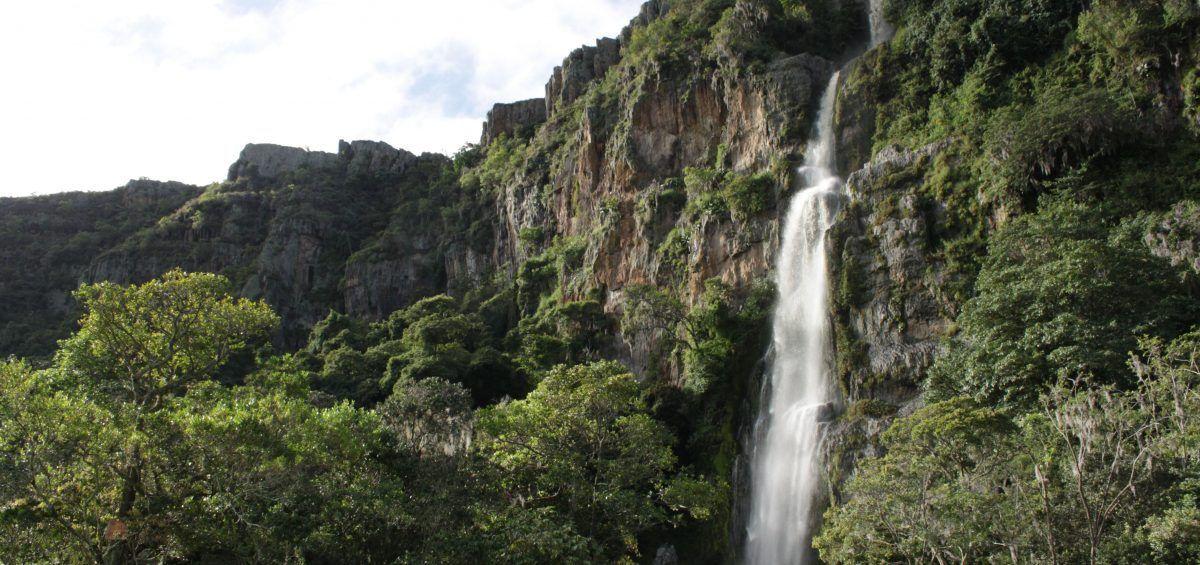El Parque Nacional Yurubí, guardián del manantial de la vida