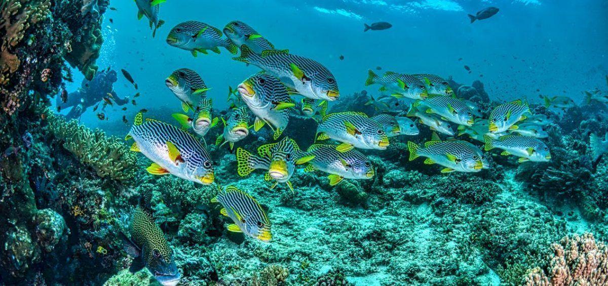 Proteger los océanos para restaurar la biodiversidad y mitigar las emisiones