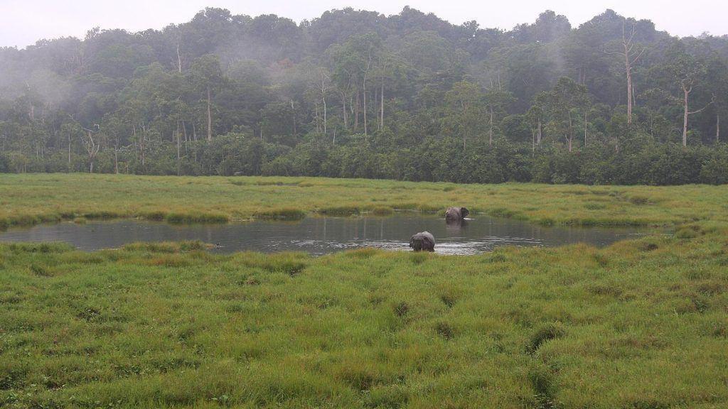 Estiman que sólo el 3% de los ecosistemas terrestres siguen intactos