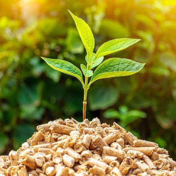 Crean polímeros renovables a partir de materia prima vegetal