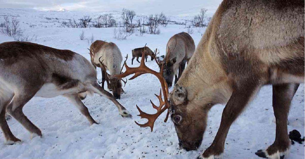 La fauna del Ártico está cambiando drásticamente