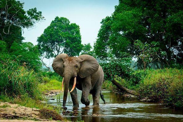 Bosques tropicales de África son más resistentes a climas extremos