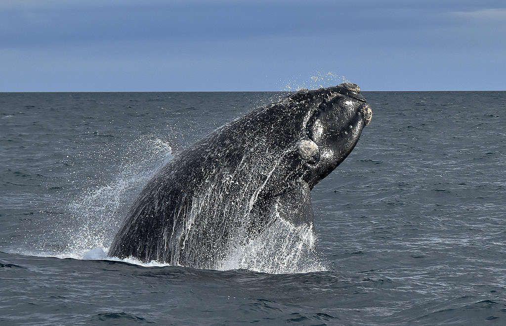 Krill antártico, un gran aliado para eliminar el CO2 de la atmósfera