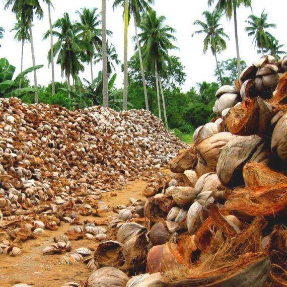 Innovaciones con la cáscara de coco a favor del ambiente