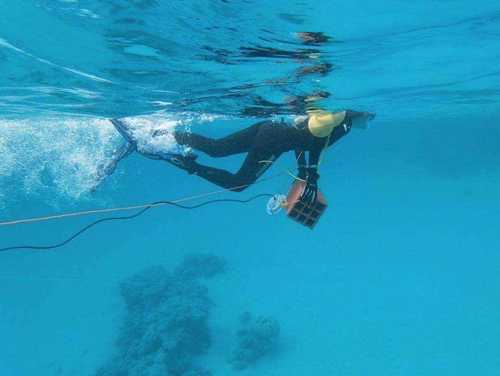 El ruido de la actividad humana afecta la vida en los océanos