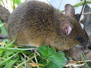 Parque Nacional Ramal de Calderas es rico en biodiversidad
